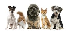 Group of dogs and cats in front of a white background - stock photo