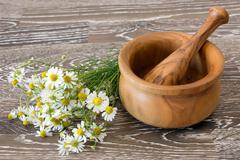 Medical chamomile - stock photo