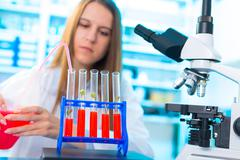 Research of GMO plants in microbiological laboratory Stock Photos