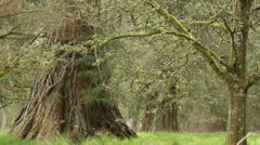 Slider shot of an old forest in rural Perthshire, Scotland Stock Footage