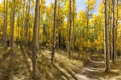Colorful Kenosha Pass Trail - stock photo