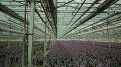 Greenhouse glasshouse growing flowers Stock Footage