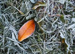 Hoarfrost and fallen leaf Stock Photos