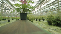 Greenhouse conveyor belt Stock Footage