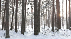 Winter forest and sun Stock Footage