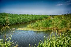 Windy landscape with river and reed Stock Photos