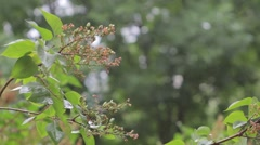 Branch of lilac after the rain in the wind Stock Footage