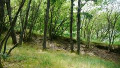 Fortress walls discovered in a dense forest 07a Stock Footage