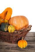 Pumpkin crop autumn Stock Photos