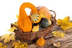 Pumpkin crop - stock photo