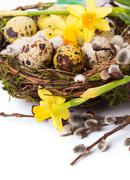 Easter eggs in the nest with narcissus - stock photo
