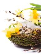 Easter eggs in the nest with narcissus Stock Photos