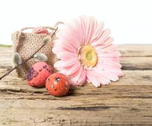 Easter eggs with gerbera daisy flowers Stock Photos