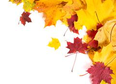 Autumn fall leaves background Stock Photos