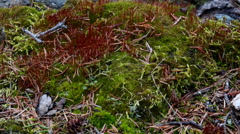 Moss and Leaves with Cliffside Rock Telemacro Slide Left HD Stock Footage