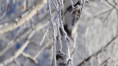 Birch tree branch in hoarfrost on a blurred defocused background - stock footage