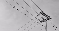 Birds on power lines Stock Footage
