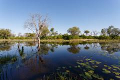 Landscape in the Okavango swamps Kuvituskuvat