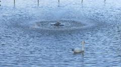 Swan swimming near a fountain on Lake Herăstrău, Bucharest Stock Footage