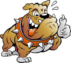 Vector Cartoon illustration of an excited Strong Muscular Bull Dog giving Thu Stock Illustration