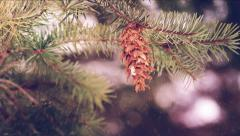 Fir Branch With Pine Cone And Snow Flake. Stock Footage