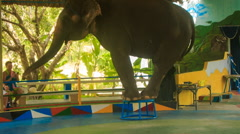 Elephant stands on circus pedestal waves trunk welcomes Stock Footage