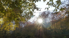 Sun rays through the forest treetops,tilt down to pile of garbage,autumn colors. Stock Footage