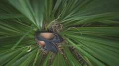 Blue men's shoes in the grass Stock Footage