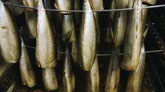 Fish prepared for smoking in stock Stock Footage