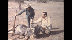 Vintage 16mm film, 1972, Kenya, hunters and dead wildebeest Stock Footage