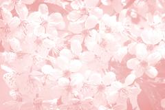 Background image with pale pink flowers. Stock Photos