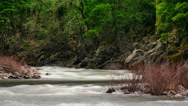 Stock Video Footage of A time lapse river flows through the forest - Time Lapse 2011 HD, 4K