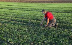 Agriculture, farmer examine wheat field Stock Photos