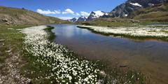 Stock Photo of Mountain panorama: a small lake with white flowers (Eriofori, en