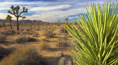 Joshua Tree landscape pan left and up Stock Footage