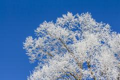 White winter wonderland with blue sky and tree from right - stock photo