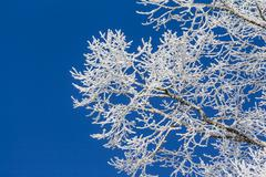 White winter wonderland with blue sky and detailed branches Stock Photos