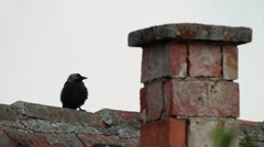 Crow looks on the high ridge of a roof 483 Stock Footage