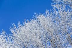 White winter wonderland with blue sky and right tree row - stock photo