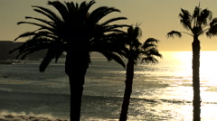 Sunset over the Ocean with Palm Trees  rocky coastline Southern California Stock Footage