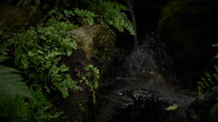 Stream with Rocks and ferns slow motion water splashing Stock Footage