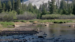 Deer in Tuolumne River Stock Footage