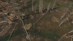 The Wasted Blight Toxic Dead Forest Aerial HD Stock Footage