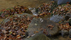 Creek with stones and fallen yellow leaves, autumn, water, cascade, close up. Stock Footage