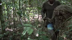 Baka people nets hunting Stock Footage