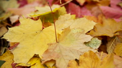 Fallen Yellow Leaves in Autumn. Translation Focus Stock Footage