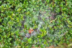 high resolution green leaf with water spray cobwebs texture background - stock photo