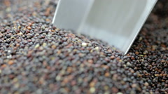 Scooping Black Quinoa Seeds Stock Footage