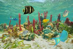 Colorful tropical fish and marine life underwater - stock photo