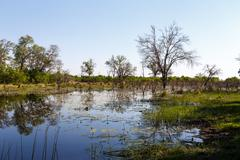 landscape in the Okavango swamps - stock photo